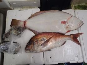 1鮮魚セット2014930