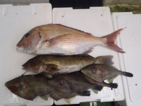 6鮮魚セット2014930