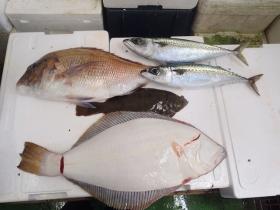 7鮮魚セット2014930
