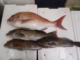 8鮮魚セット2014930