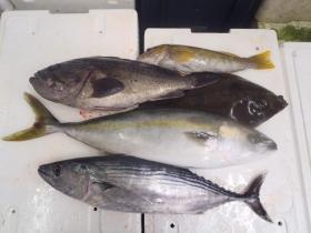 12鮮魚セット2014930