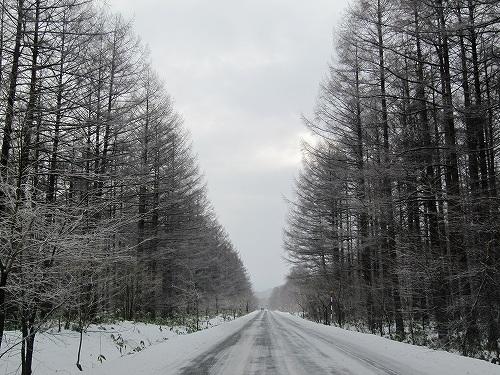 s-カラマツの道~