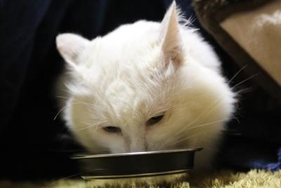 kotatsu2 resized