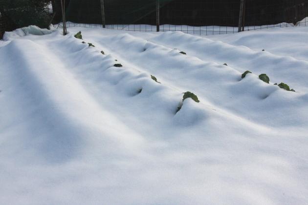 雪景色の畑