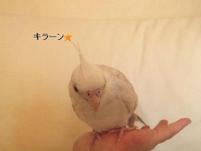 10_20111229225138.jpg