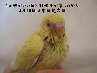 10_20120328204143.jpg