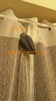 111203_002920_ed.jpg