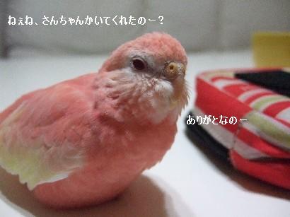 17_20120310003107.jpg