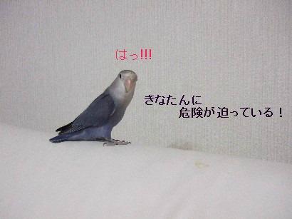3_20111226121811.jpg