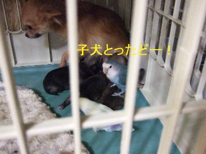 3_20111231213909.jpg