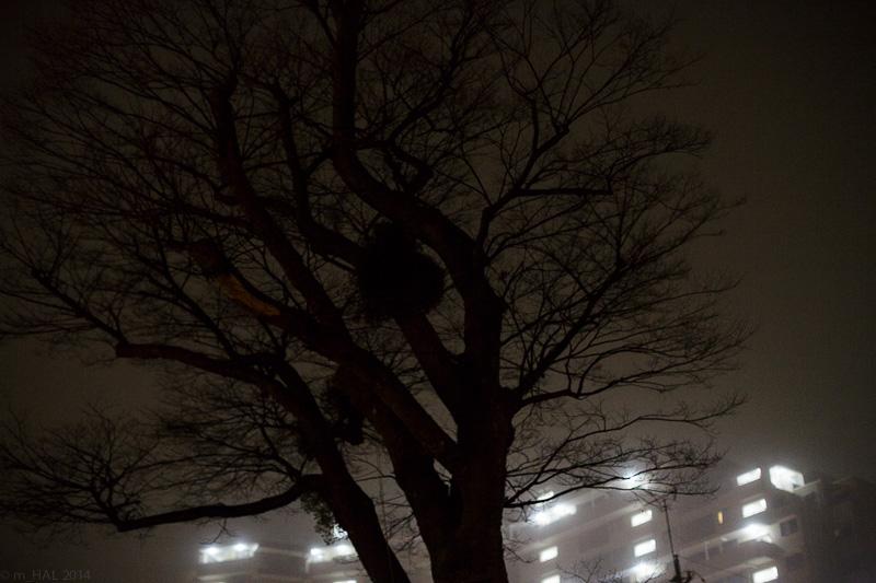 20140204_fog-03.jpg