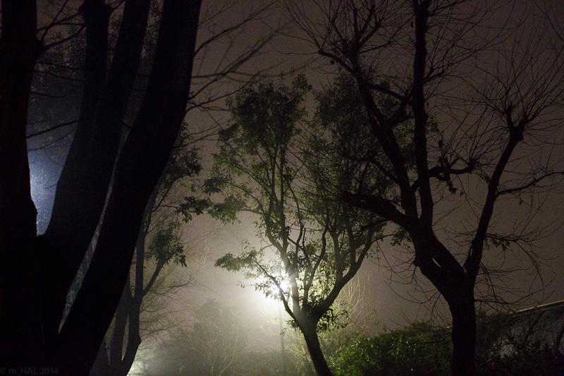 20140204_fog-04.jpg