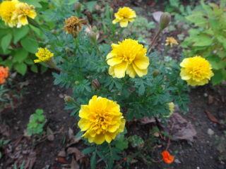 お花20111002
