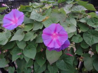 お花20111014