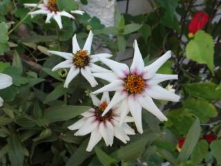20111028お花