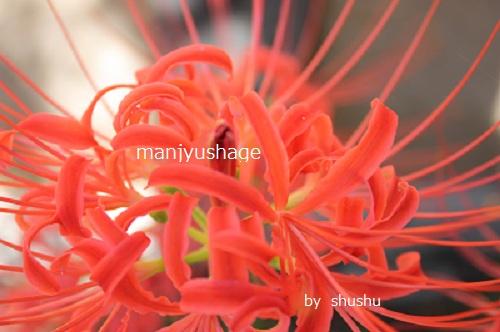 mannjyushage.jpg