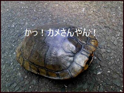 Image3611.jpg