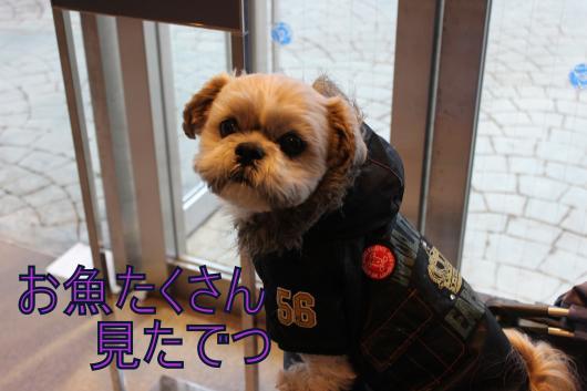・搾シ祢MG_2403_convert_20130130035231