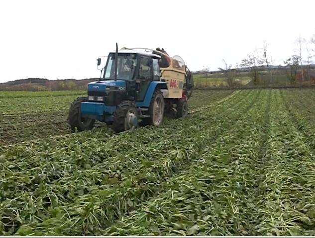 ビートの収穫作業