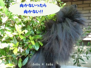 004_20110907210035.jpg