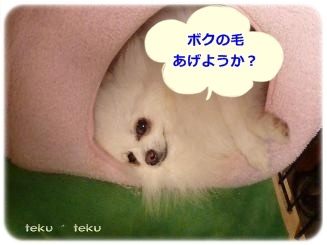P1190083_20130526095757.jpg