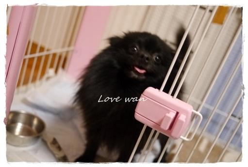 love_20130507202219.jpg
