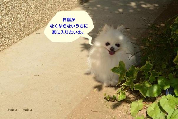 ne2_20130521231129.jpg