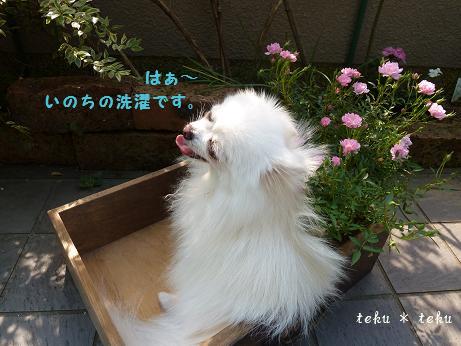 ne6_20111021221443.jpg