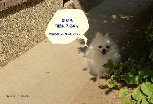 ne_20130521230930.jpg