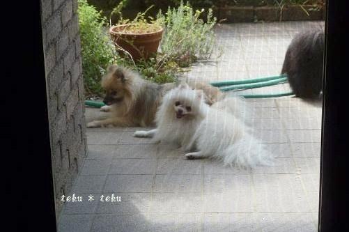 rine2_20110912220621.jpg