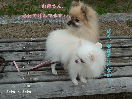 rine_20111015211555.jpg