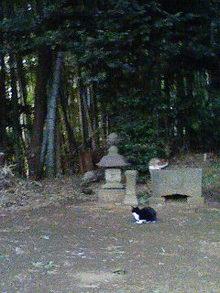 ねことタヌキ神社.jpg