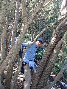 メタボチェックの林
