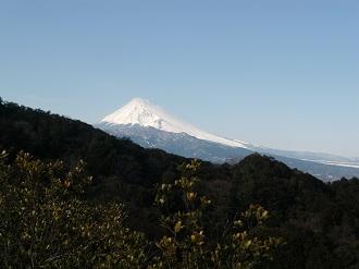 山の中から富士山