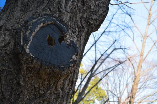 顔マークの木