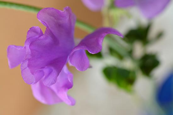 紫のチョウチョ2