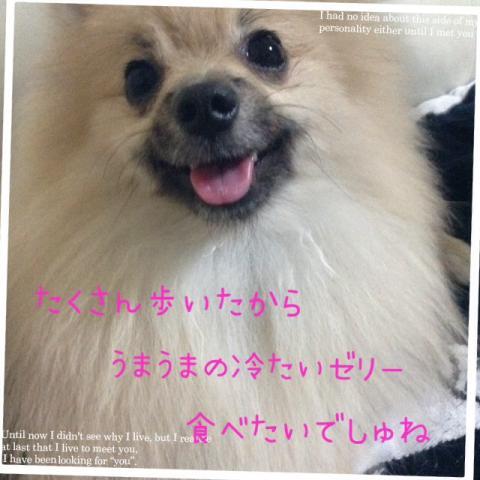IMG_2195[1]_convert_20141007100325
