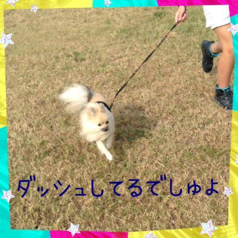 IMG_2407[2]_convert_20141014112717