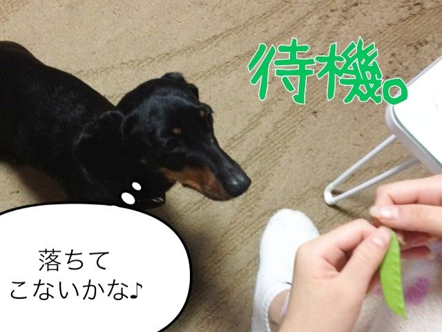 blog7-2.jpg