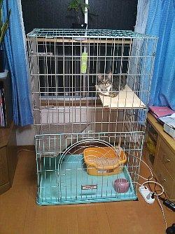 猫小屋改良