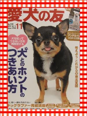 111101愛犬の友