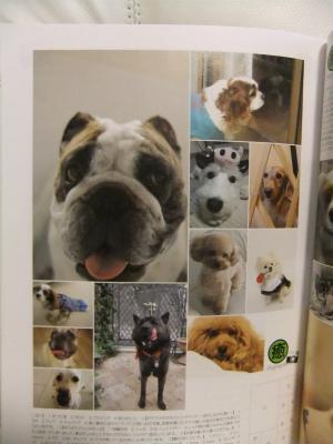 111101愛犬の友 癒