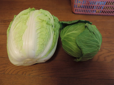 まさ子さんのキャベツと白菜