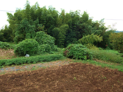 開墾前の畑1