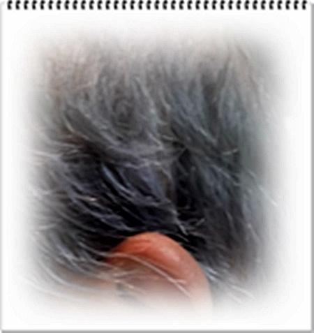 20120216白髪 利尻 2012年2月16日現在