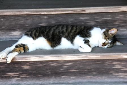 大窪寺で眠る猫_H25.10.12撮影