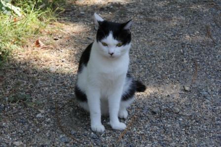 もう一匹の猫_H25.10.12撮影