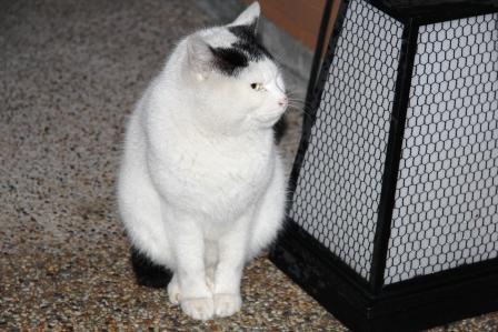 とみやの猫_H25.12.10撮影