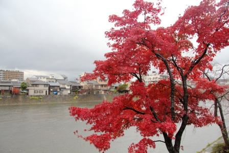 川端通りの紅葉_H25.12.10撮影