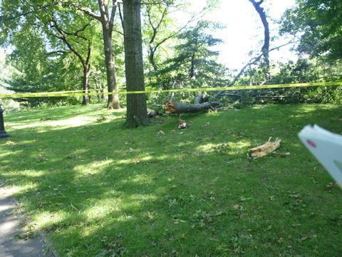 ハリケーンで倒れた木